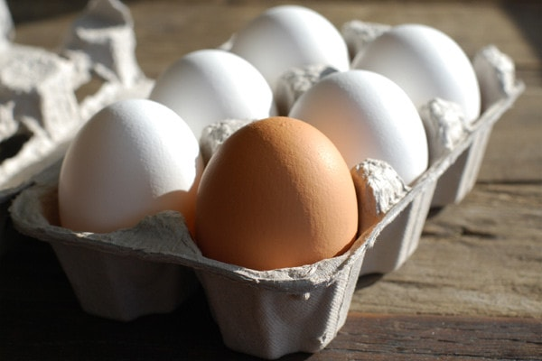 A World of Eggs – How They Differ Between Italy and North America