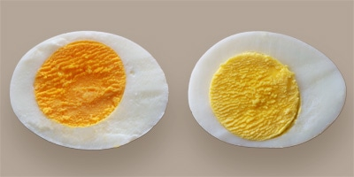 A dark yellow yolk found in a brown egg, and a lemony yellow yolk found in a white egg.